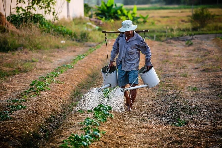 Farmer Watering