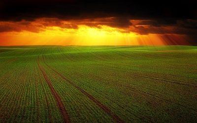 farm full of crops